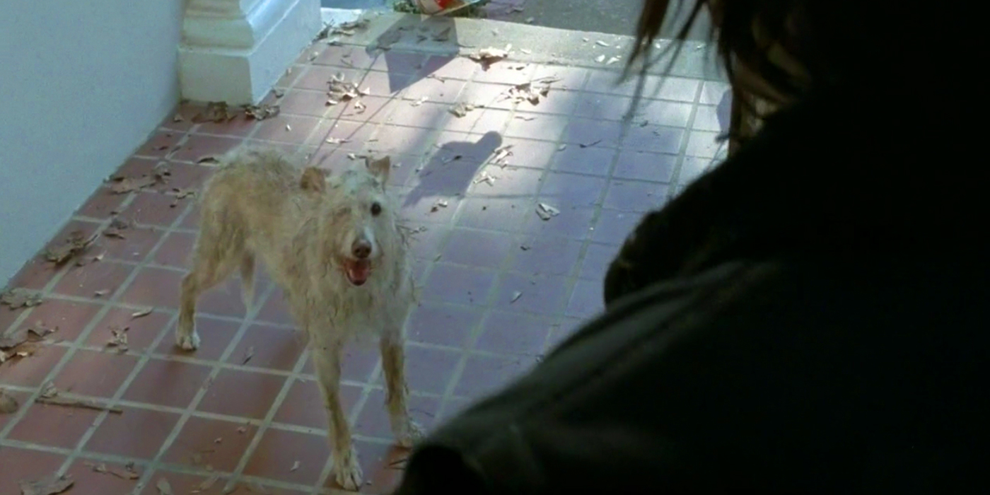 Dooley Dog Walking Dead