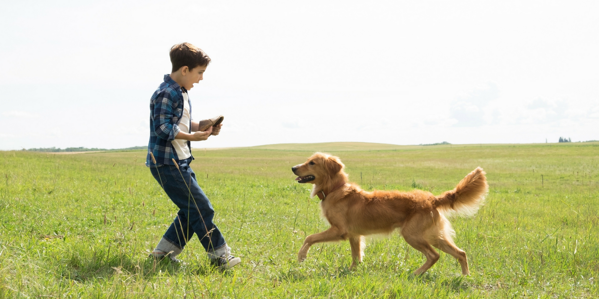 A Dog S Purpose Cry