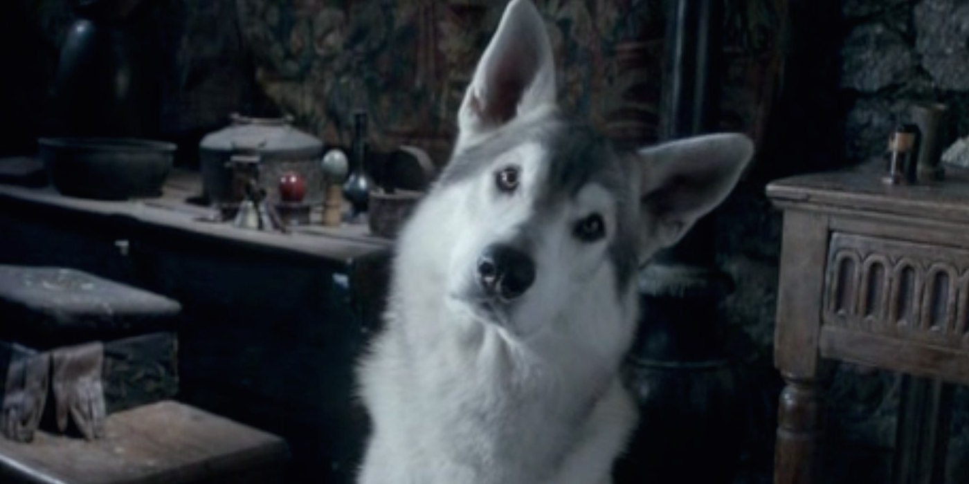 Nymeria the direwolf on Game of Thrones