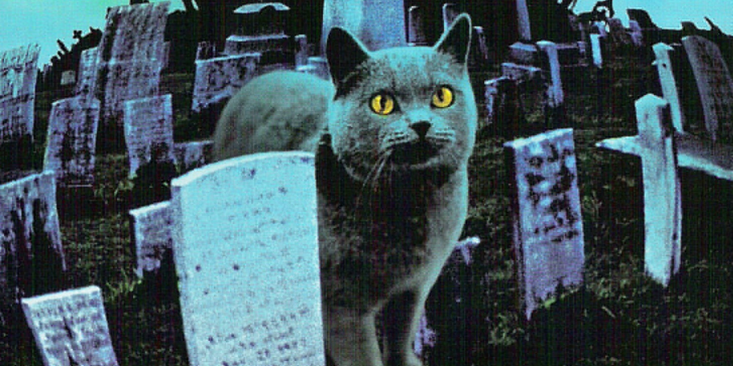 pet sematary remake sets release date screen rant