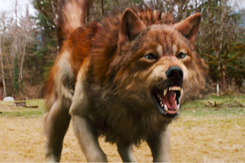 New Moon wolf form jacob Will New Moon Change The Twilight Sagas Image?