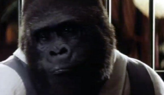 buddy buddy The Evolution of the Movie Ape