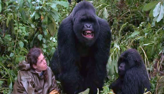 gorillas in the mist The Evolution of the Movie Ape