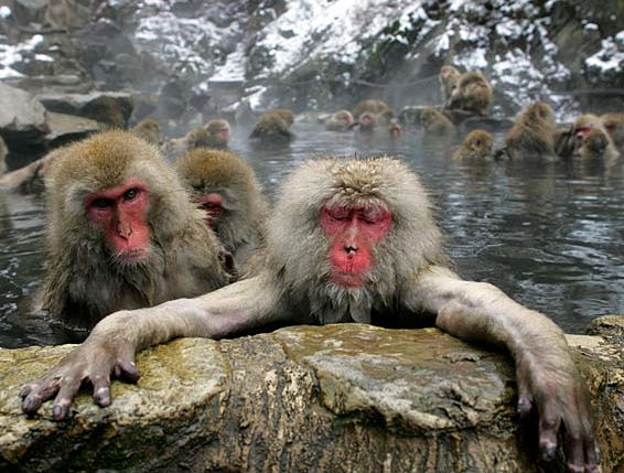 hangover 2 monkeys The Hangover 2: In Thailand?
