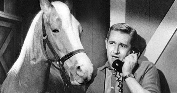 mr ed movie Mr. Ed Movie Being Developed By Doctor Dolittle Producer