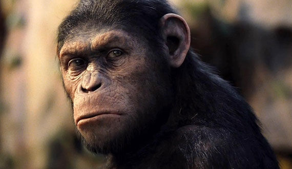 rise of the planet of the apes caeser The Evolution of the Movie Ape